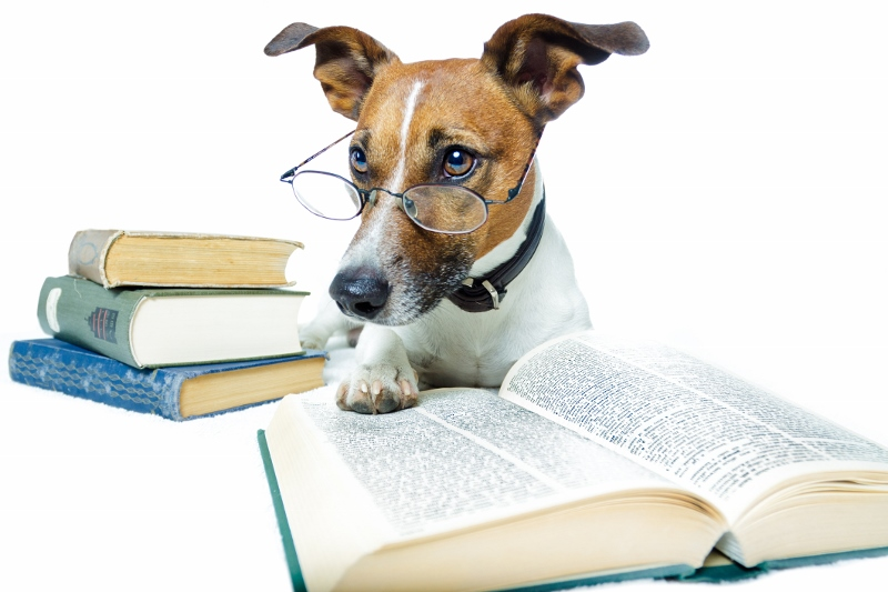 Burnaby Classes | DogWorks |Puppy Reading